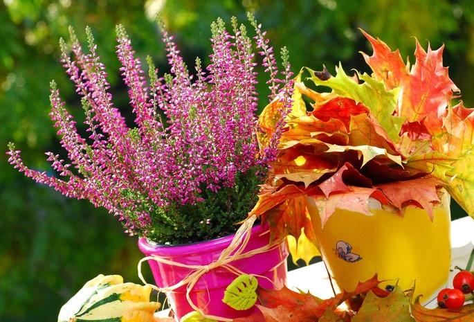 Картинки цветы осени для рабочего стола